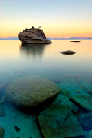 What Lies Beneath - Bonsai Rock